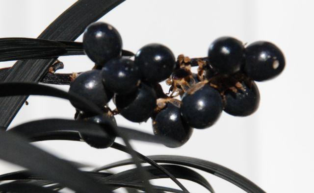 http://www.espritsdegoshin.fr/components/com_agora/img/members/72593_fruit-1_[640x480].jpg
